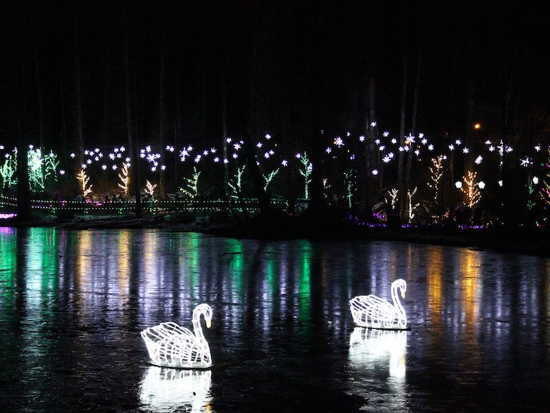 Photo – Winter – Swan